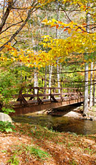 Fall is a special time at Hawk and a fall foliage outing is a perfect way to spend the day